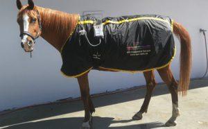 Magnetfeld Therapie für Pferde